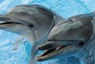 Дельфинарий Оскар Трускавец Дитячі тури в Карпати літо детские группы туры для школьников в Карпаты