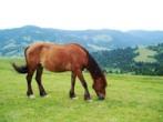 катання на конях рекламний тур по Карпатах  Клуб Мандрівників