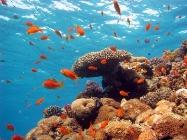 Рибки Ейлат ІЗРАЇЛЬ Тури на Близький Схід Авіа тури в Ізраїль Клуб Мандрівників