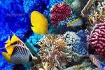 рибки ХУРГАДА ЄГИПЕТ Tours in EGYPT тури в Єгипет Hurghada Клуб Мандрівників