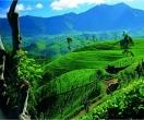 Чайна Плантація ШРІ-ЛАНКА Tours in SRI-LANKA тури в ШРІ-ЛАНКУ SRI-LANKA Клуб Мандрівників