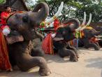 слон ПАТТАЙЯ ПХУКЕТ ТАЙЛАНД Tours in THAILAND тури в ТАЙЛАНД Pattaya Rhuket Клуб Мандрівників