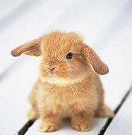 Кролик НІДЕРЛАНДИ Тури в Європу Автобусні тури в Нідерланди Клуб Мандрівників