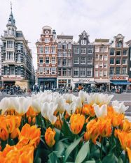 Квіти НІДЕРЛАНДИ Тури в Європу Автобусні тури в Нідерланди Клуб Мандрівників