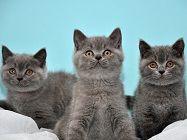 Котики НІМЕЧЧИНА Тури в Європу Автобусні тури в Німеччину Клуб Мандрівників