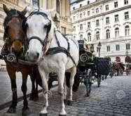 Коники Відень Австрія Тури в Європу Автобусні тури в Австрію Клуб Мандрівників