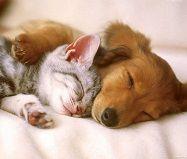 Собака та кіт НІМЕЧЧИНА Тури в Європу Автобусні тури в Німеччину Клуб Мандрівників