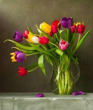 Тюльпани БЕЛЬГІЯ Тури в Європу Автобусні тури в Бельгію Клуб Мандрівників