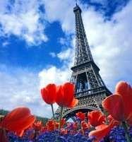 Тюльпани Париж ФРАНЦІЯ Тури в Європу Автобусні тури у Францію Клуб Мандрівників